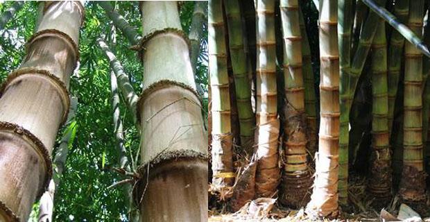 Flessibili come il bambù